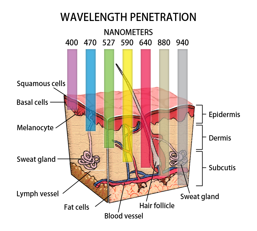 The wavelength in nanometers and how deep it can penetrate the dermis