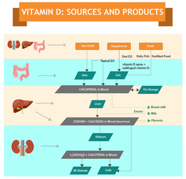 Vitamin D: sources and products